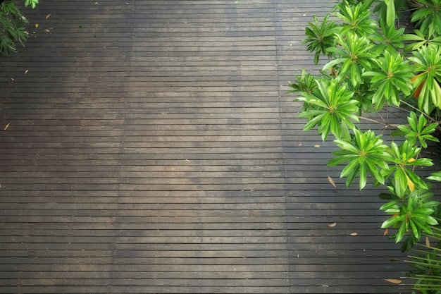 High angle view of dark wooden floor with lush foliage trees in summer.