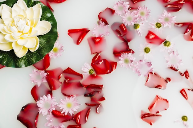 High angle view of flower petals and lotus floating on milk