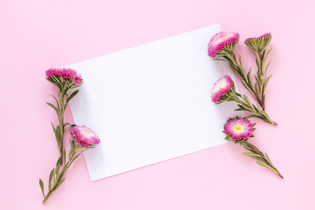 High angle view of flowers and blank paper sheet on pink backdrop