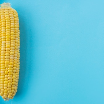 High angle view of a fresh corn cob on blue backdrop