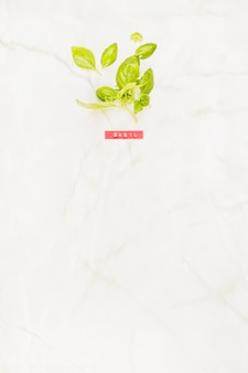 High angle view of fresh green basil leaves on marble