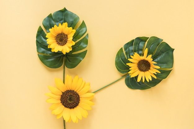 High angle view of fresh sunflowers on monstera leaves over yellow surface