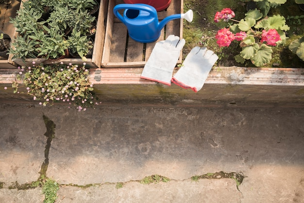 High angle view of gardening gloves; watering can near fresh flower plants in greenhouse