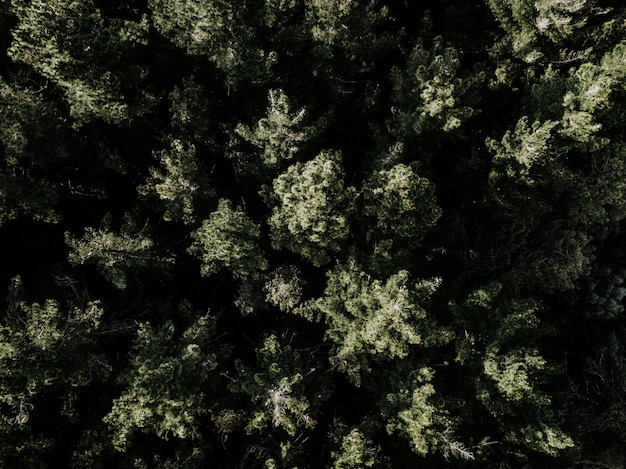 High angle view of green trees growing in forest