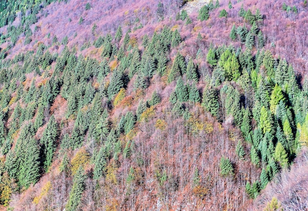 Veduta dall'alto di alberi verdi e piante viola che crescono sulle colline