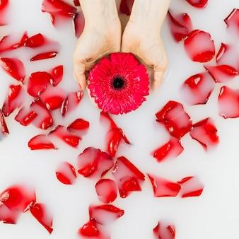 물에 떠있는 꽃잎 위에 사람의 손 잡고 꽃의 높은 각도보기