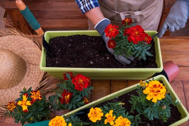 エプロンと手袋をはめてガーデニングと新しい季節の花を植えている年配の女性のハイアングルビュー。木製の素朴な背景とテーブル