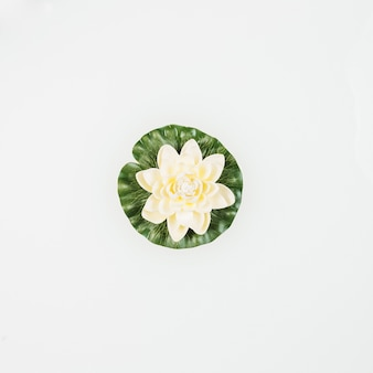 High angle view of beautiful lotus on white background