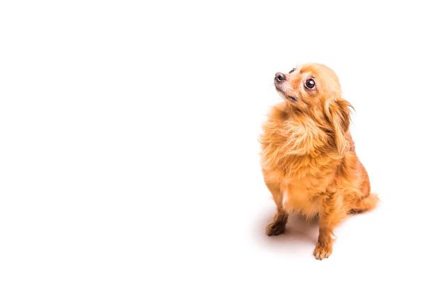 上を向いている茶色の犬の高い角度の光景