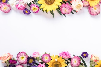 High angle view of colorful fresh flowers on white background