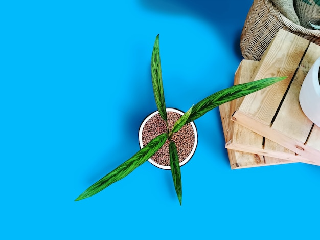 Высокий угол обзора декоративных горшечных растений и небольших деревянных поддонов, изолированных на синем полу
