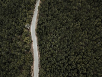 High angle view of empty road in woodland