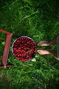 さくらんぼのバケツと緑の芝生のはしごの一部の横にある女性の足の高角度のビュー。さくらんぼの収穫、ガーデニング、クローズアップ。