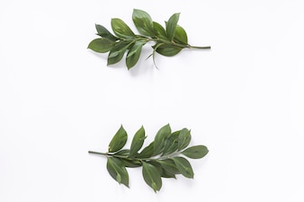 High angle view of fresh green leaves on white background