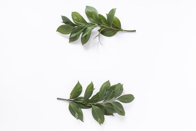 Высокий угол зрения свежих зеленых листьев на белом фоне