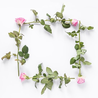 High angle view of rose flowers forming square frame on white background