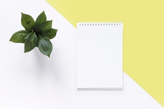 High angle view of spiral notepad and plant on dual white and yellow backdrop