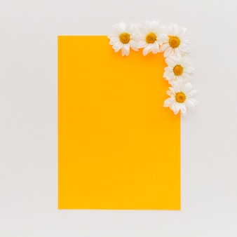 High angle view of orange blank paper with white daisy flowers on white background