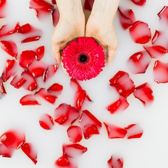 High angle view of a person's hand holding flower over petals floating on water