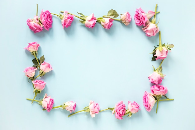 High angle view of pink roses forming frame on blue backdrop