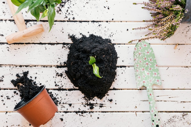 High angle view of potted plant; gardening tools with dirt on wooden bench