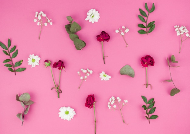 High angle view of red rose; white daisy flowers; baby's breath and leafs on pink background