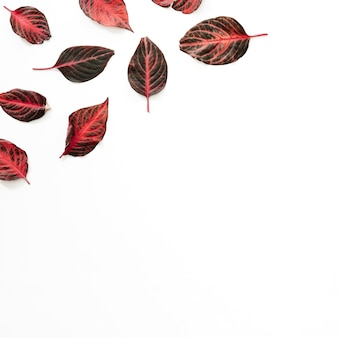 High angle view of reddish leaves on white background
