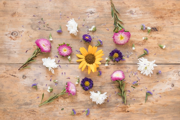 High angle view of various colorful flowers on wooden background