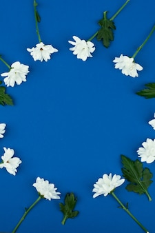 High angle view of a white daisy flowers on a blue space. round space for text.