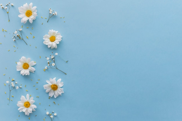 High angle view of white flowers over blue backdrop