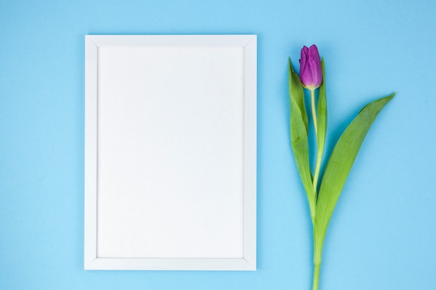 High angle view of white photo frame and tulip on turquoise background