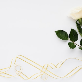 High angle view of white rose and ribbons on plain backdrop