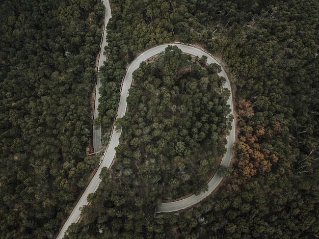 High angle view of winding road surrounded by green trees