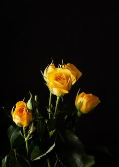 높은 각도 노란 장미