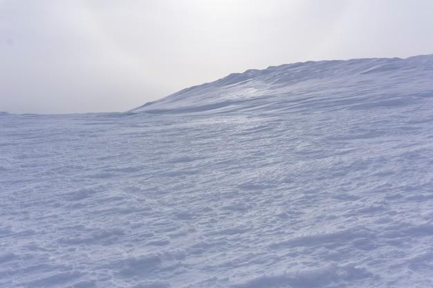 우울한 흐린 하늘 배경에 빛나는 전나무로 덮인 높은 북극 사막