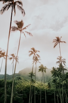 High babassu palm trees under the crazy sky surrounded by green mountains