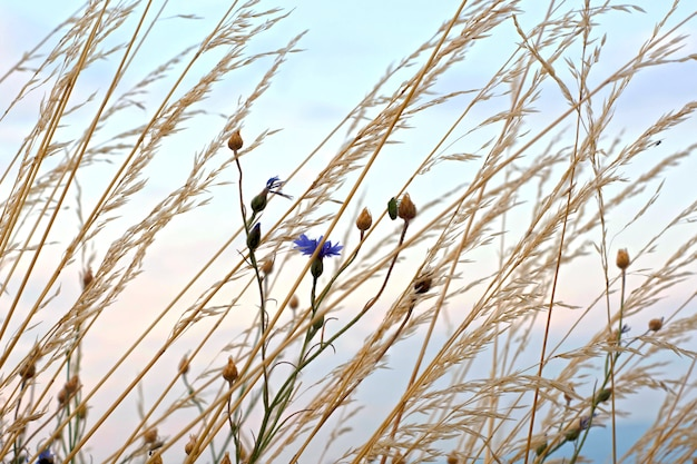 High grass and flowers against the sky.