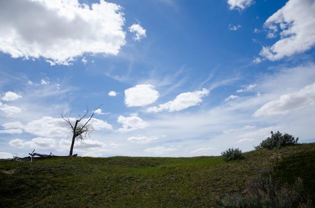 曇った青い空の下、草や木々に覆われた高い丘