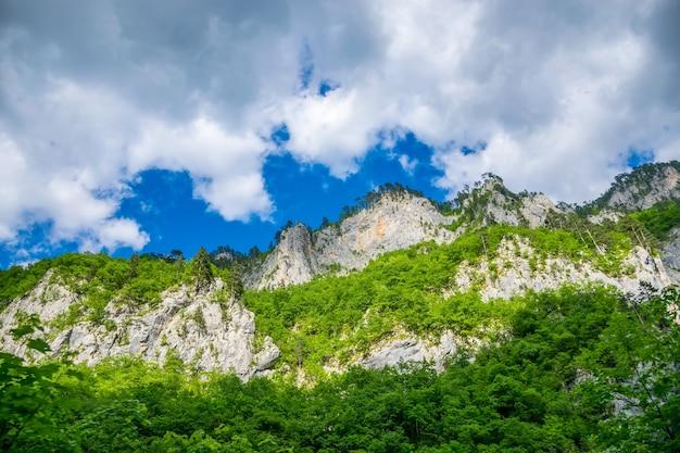 山の高いところに背の高い黒い松が生えています。