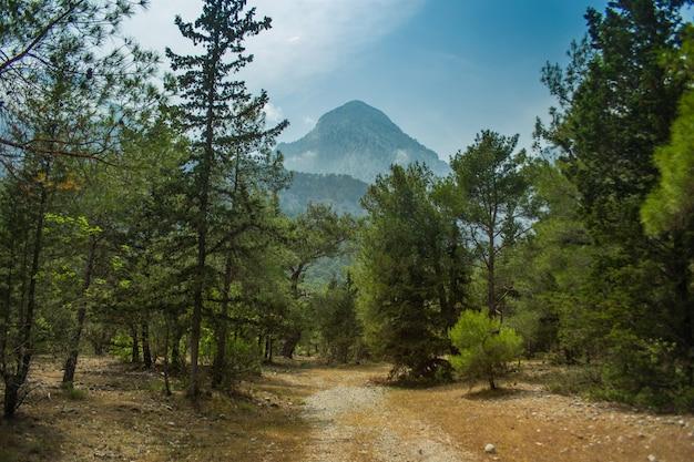 여름 오후의 높은 산과 푸른 소나무 숲