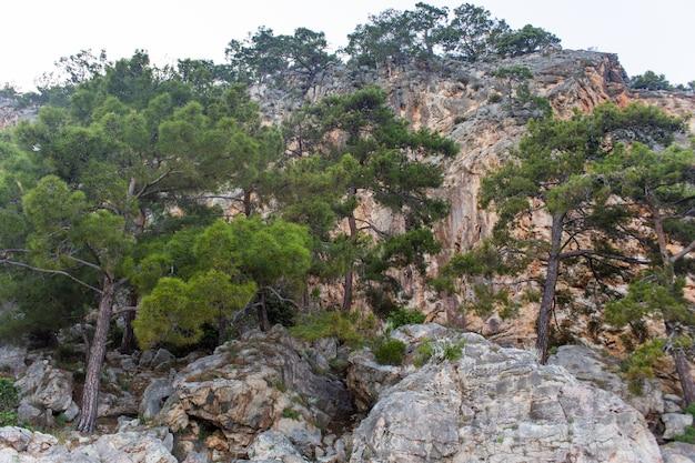 높은 산과 푸른 소나무 숲