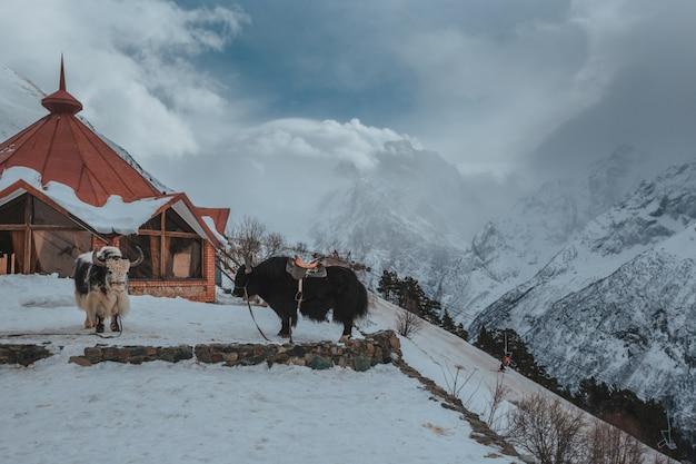 冬の雪の下の高い山