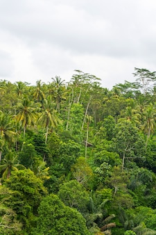 High palm trees growing in the rainforest, light blue sky above green plants stock photo