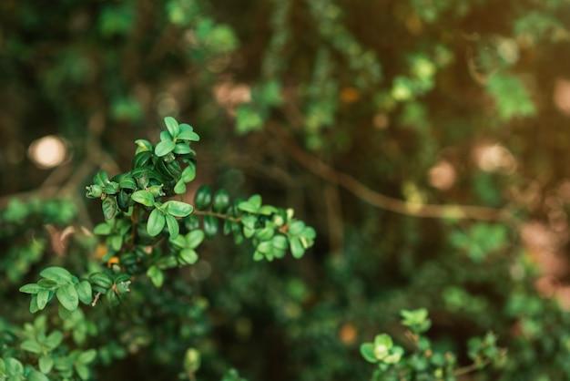 고해상도 텍스처입니다. 바바리 덤불의 녹색 가지는 흐릿한 배경으로 큽니다.