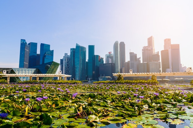 High-rise buildings and lotus pond.