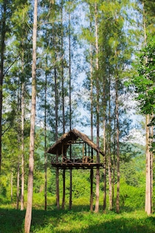 High seat in the forest in thailand