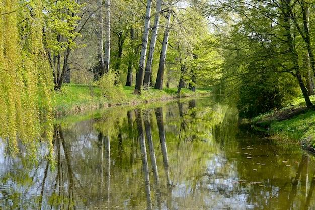 Возле озера растут высокие весенние деревья.