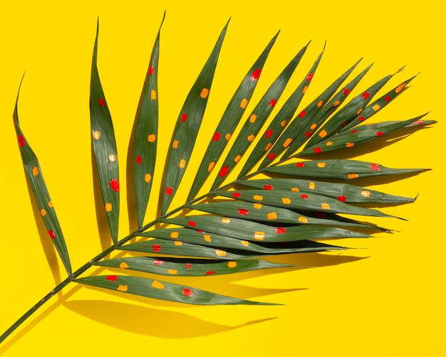 High view branch of fern leaves on yellow background