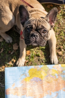 High view cute dog and map