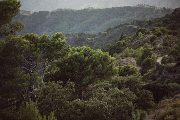 Высокий вид на красивый пейзаж с горами и деревьями